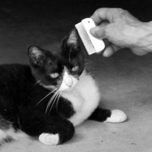 ステンレス製クシでノミ取りをされている黒猫